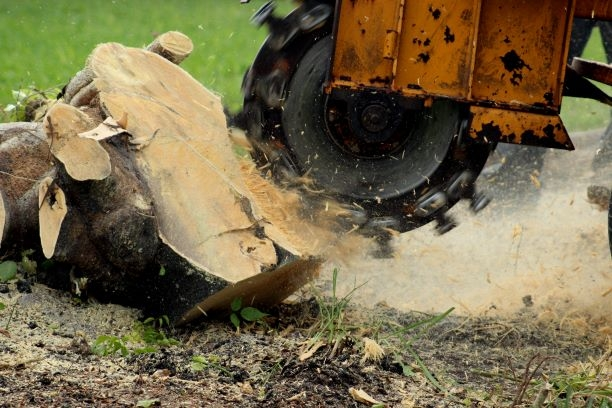 Best Stump Grinding Services in Grand Rapids